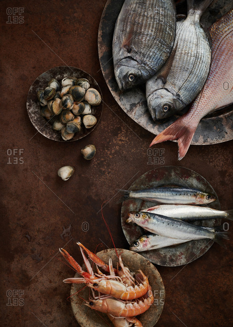 Black seabream, red snapper, cockles, fresh sardines and langoustines on metal platters