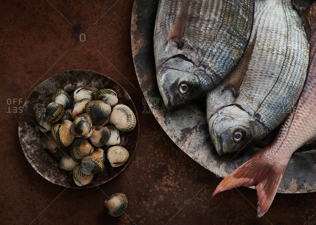 Fresh black seabream fish, red snapper and cockles on textured metal surfaces