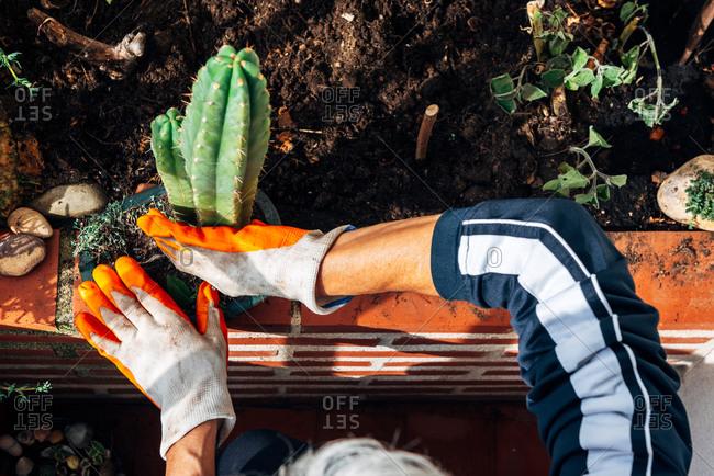 Faceless female gardener caring about plants in garden