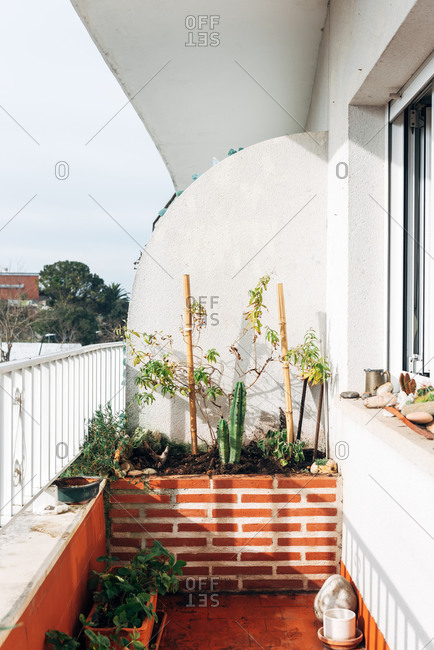 Green decorative plants on flowerbed on balcony of apartment in bright sunlight