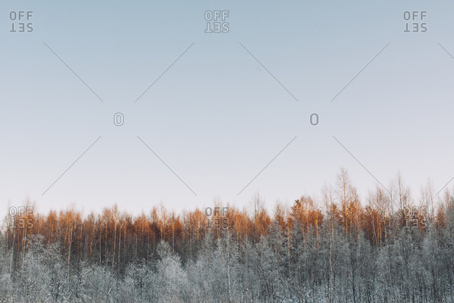 From above quiet winter landscape with tranquil forest lightened with sunlight under clear sky in Swedish Lapland