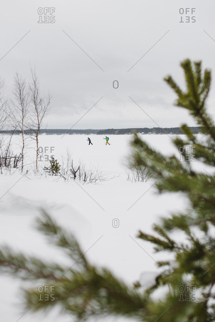 Winter landscape with skiers running on snowy field in cloudy day framed with spruce tree branches