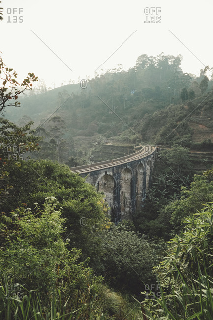 Exotic rainforest around ancient big bridge