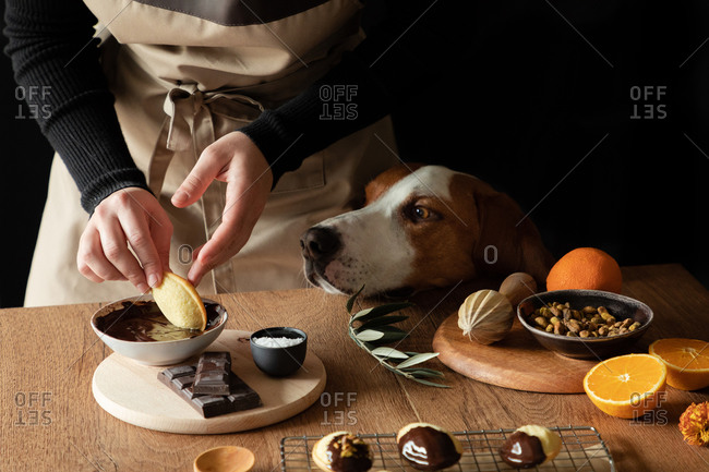 Crop housewife in apron preparing Madeleine at wooden table at home kitchen and dipping cookies at melted chocolate while curious dog standing nearby at looking attentively