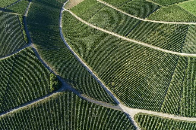 Germany- Bavaria- Drone view of green vast vineyard in summer