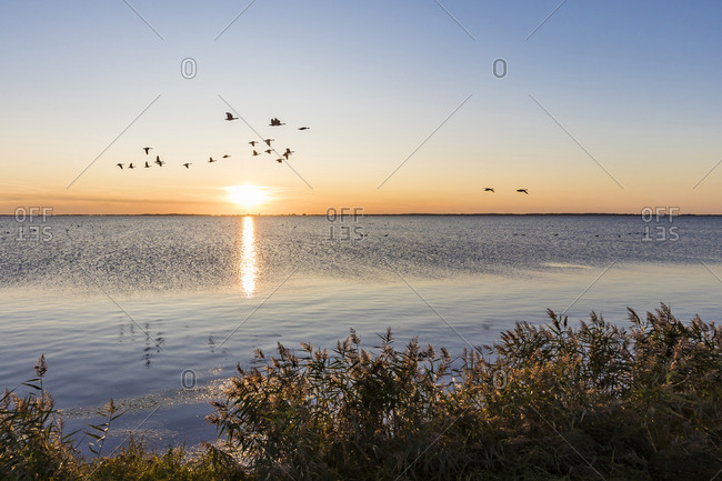 Germany- Mecklenburg-West Pomerania- Baltic Sea- Ruegen Island- Schaprode- Schaproder Bodden- Cranes (Grus grus) flying above sea at sunset