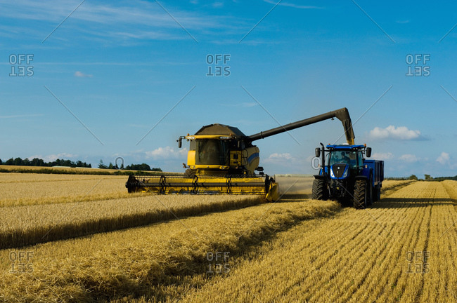 Combine harvester and tractor harvesting a crop in a field in summer.