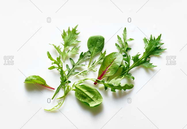 Composition with various salad leaves on white background.