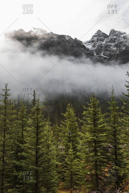 Fog over tree line in Banff National Park Canada