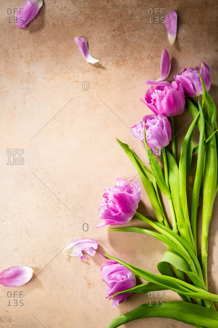 Overhead view of bunch tulips on light surface
