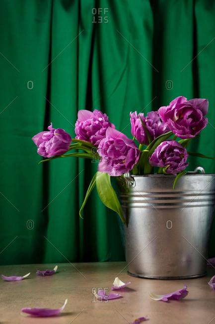 Bouquet of tulips in metal bucket