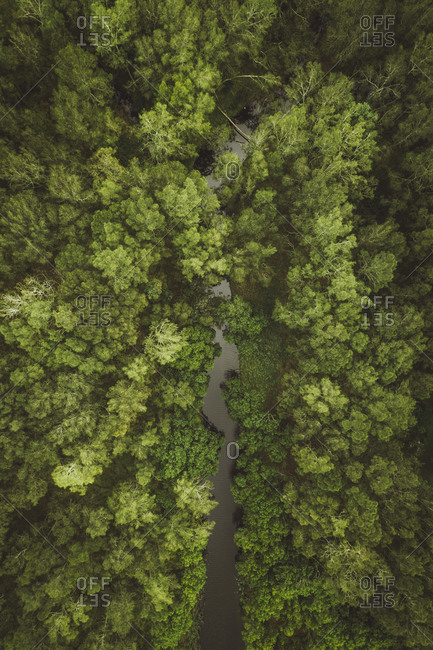 Aerial View of the Terrigal Forest next the  beach, Australia.