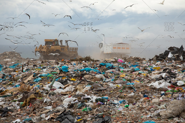 Flock of birds flying over vehicles working and clearing rubbish piled on a landfill full of trash with cloudy overcast sky in the background. Global environmental issue of waste disposal.