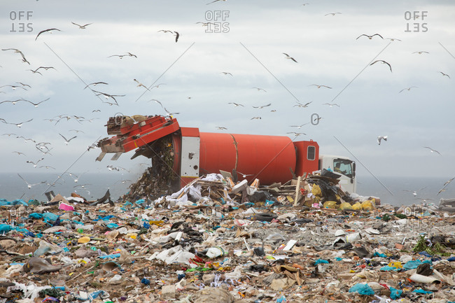 Flock of birds flying over vehicle working and delivering rubbish to a landfill full of trash with cloudy overcast sky in the background. Global environmental issue of waste disposal.