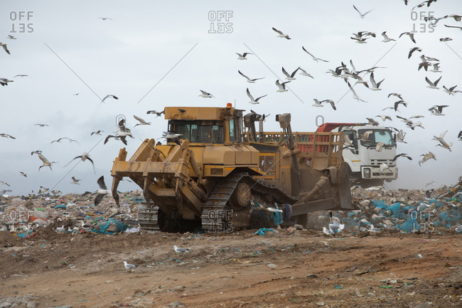 Flock of birds flying over vehicles working, clearing and delivering rubbish piled on a landfill full of trash with cloudy overcast sky in the background. Global environmental issue of waste disposal.