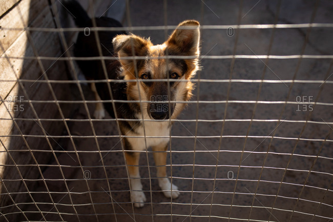 Front high angle view of a rescued abandoned dog in an animal shelter, standing in a cage in the shadow and looking straight to camera.