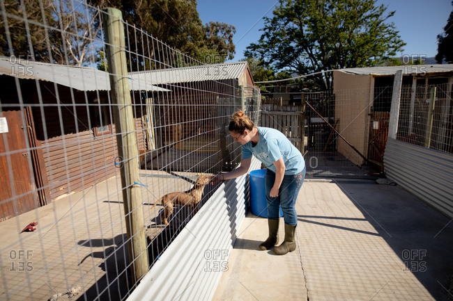 Side view of a female volunteer at an animal shelter petting a dog in a cage during a sunny day.
