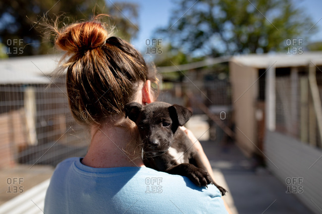 Rear view close up of a female volunteer wearing blue uniform at an animal shelter holding a rescued puppy in her arms.