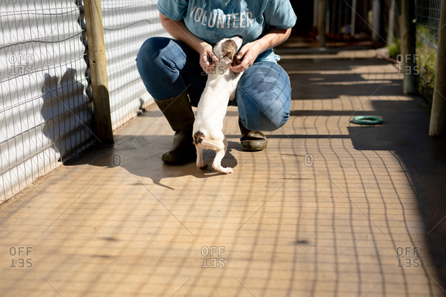 Front view low section of a female volunteer wearing a blue uniform at an animal shelter petting a rescued puppy in her arms.