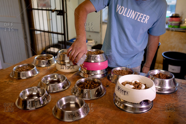 Front view mid section of a male volunteer at an animal shelter in a room preparing lots of bowls of food for their dogs.
