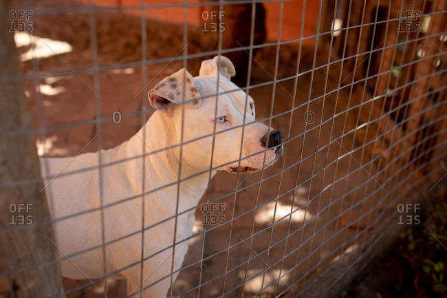 Front high angle view of a rescued abandoned dog in an animal shelter, sitting in a cage in a shadow during a sunny day.