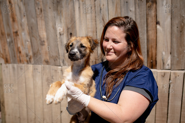 Front view close up of a female vet wearing blue scrubs at an animal shelter holding a rescued puppy in her arms on a sunny day.