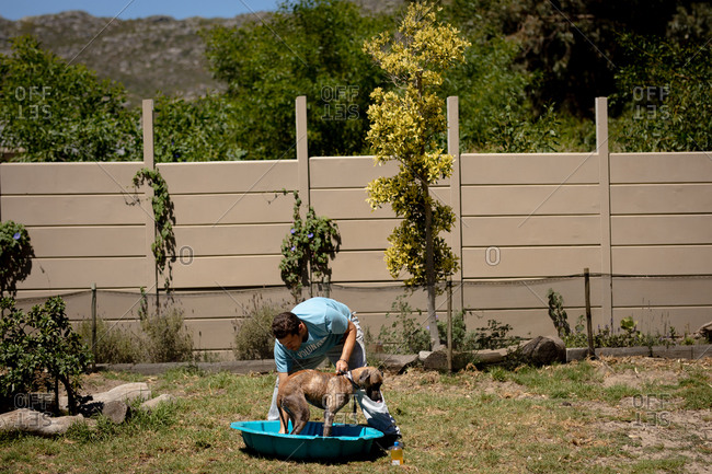 Front view of a male volunteer at an animal shelter, washing a dog standing in a blue plastic bathtub on a sunny day.