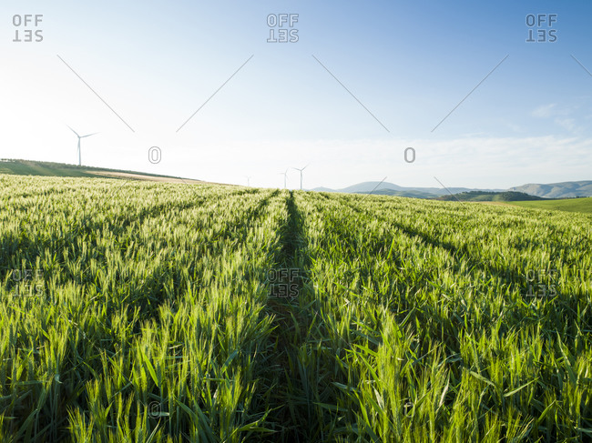 Agricultural landscape in Ardales, Malaga, Spain