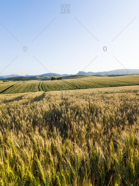 Landscape in Canete La Real, Malaga, Spain