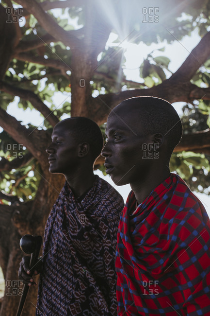 Two masai men in traditional clothes standing under big mkungu tree