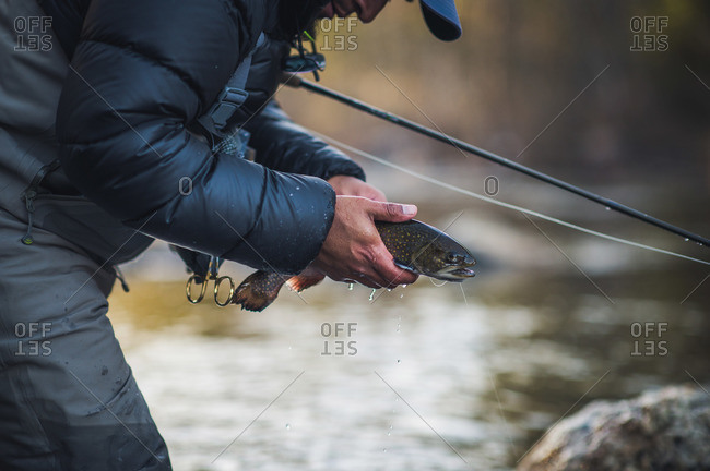 A man releases a trout during a cold morning on a Maine river