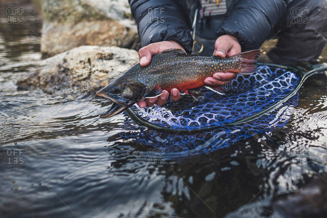 A man catches a brook trout during a cold morning in Maine.