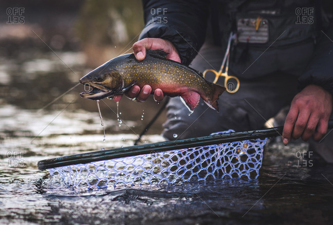 A man catches a brook trout during a cold morning in Maine