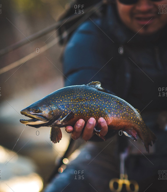 A man catches a large brook trout on a river in Maine.