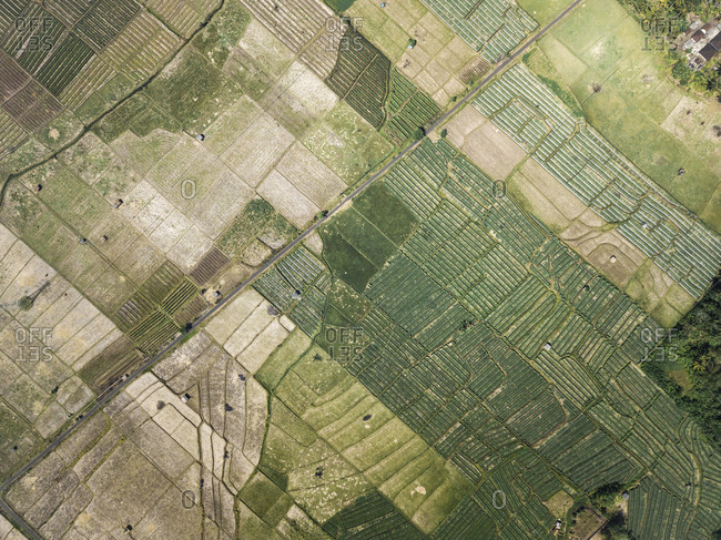 Ariel view of agricultural fields