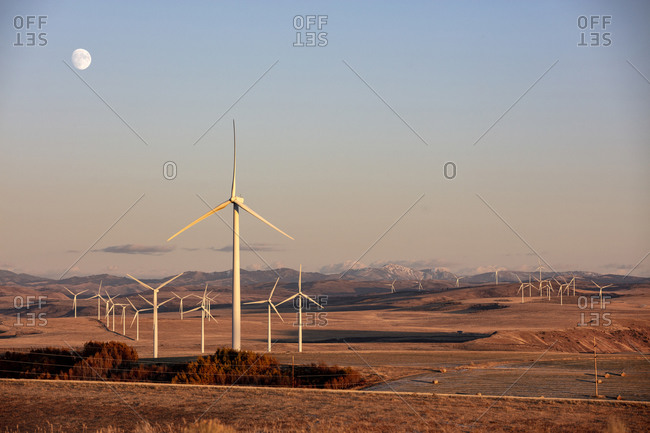 Wind turbines in a field with clear sky with the moon