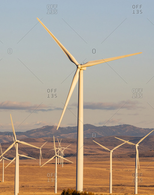 Wind turbines in a field with blue sky
