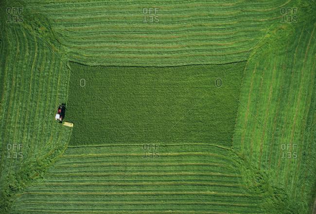Powerful transport symmetrically plowing green wheat field