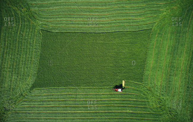Small plough making rectangular space on wheat on green field