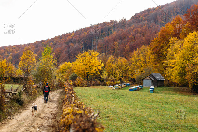 Hiker and dog walking on road near bee hives in autumn forest