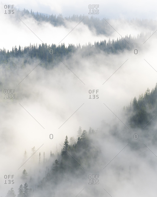 Forest layered in fog in Olympic National Park, Washington