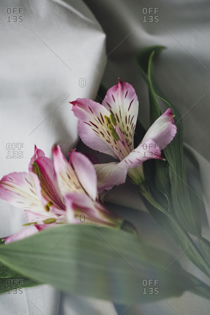 Close-up view of fresh lily bouquet