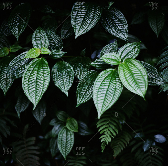 Deep Green Tropical Textured Leaves