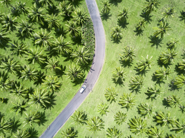 Aerial shot of silver car driving through palm trees