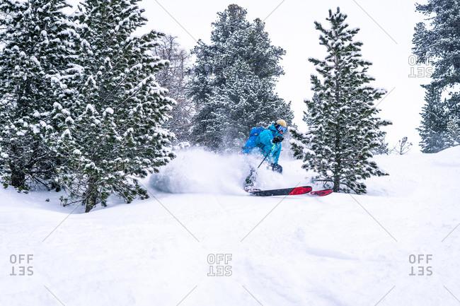 Skier turning between trees and spraying powder
