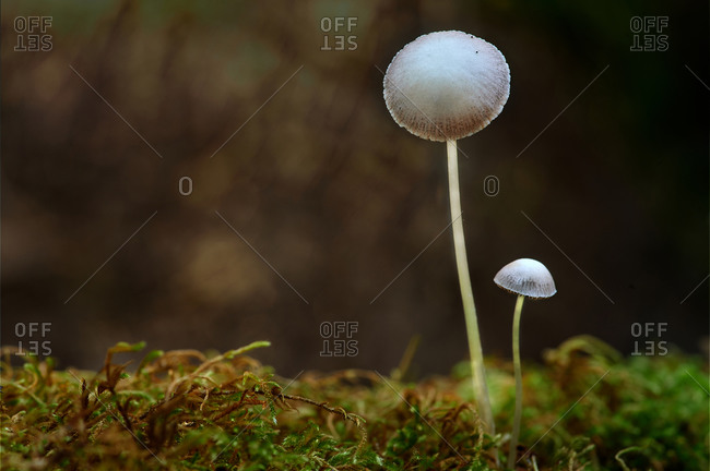Macrophotograph of a fungus or mushroom in its natural space