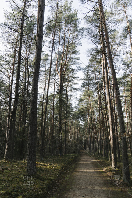 Lithuania- Kernave- Empty forest footpath