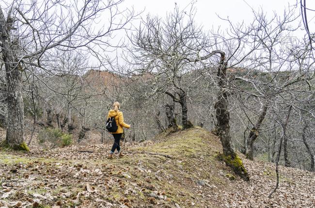 Female hiker on hiking trail in forest- near Mina de Oro Romana- Las Medulas- Castile and Leon- Spain