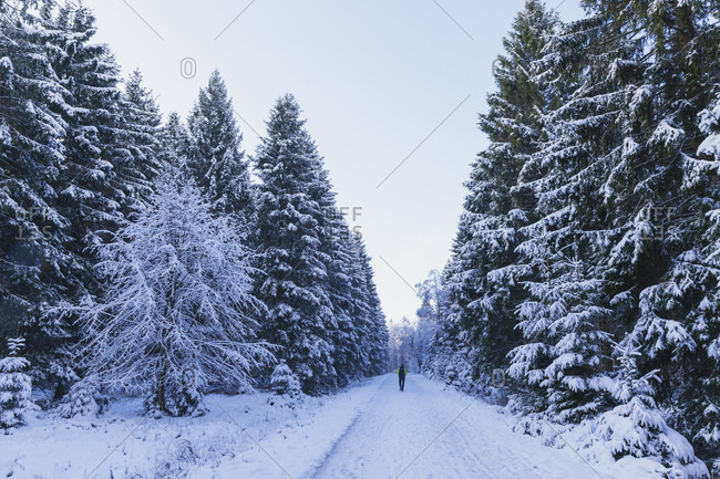 Germany- North Rhine-Westafalia- Snow-covered road in Eifel National Park