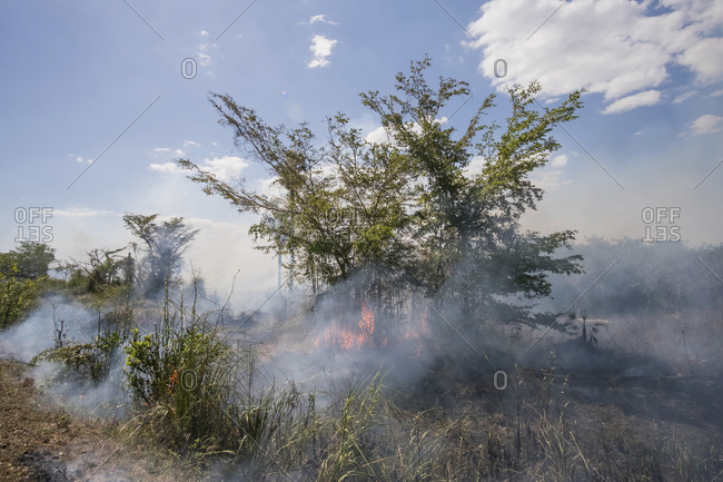 Forest fire- Cuba